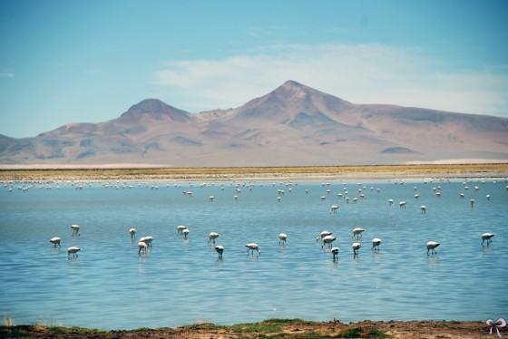 Dicas_Atacama_20